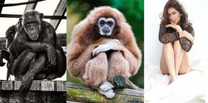 出張ホスト幻がプレゼンチンパンジー・テナガザル・人間の性衝動