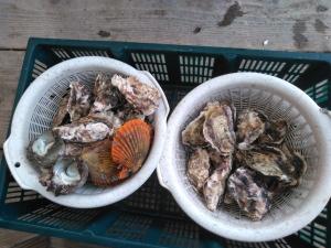 マルモ水産の牡蠣