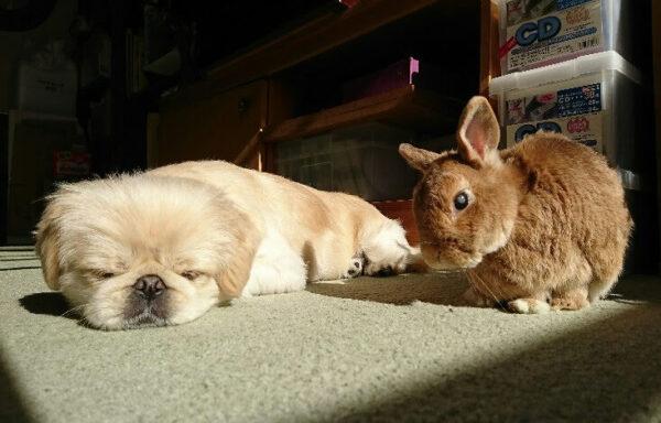ウサギと犬
