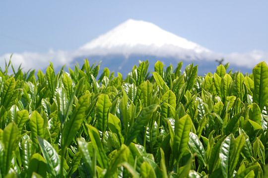 静岡茶富士園