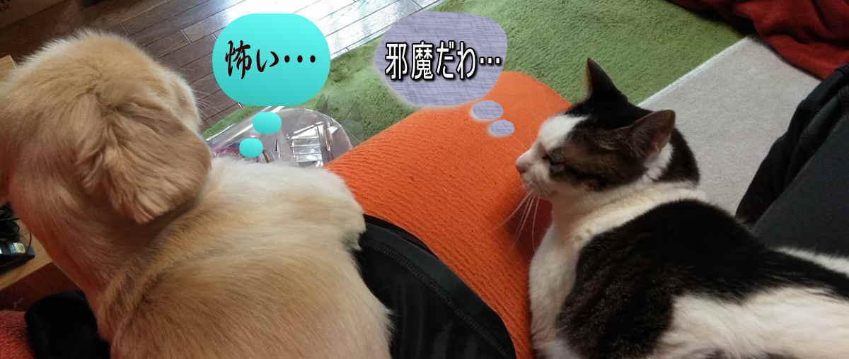 ダイエットを見守る犬と猫